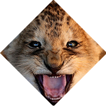 TON cub.png